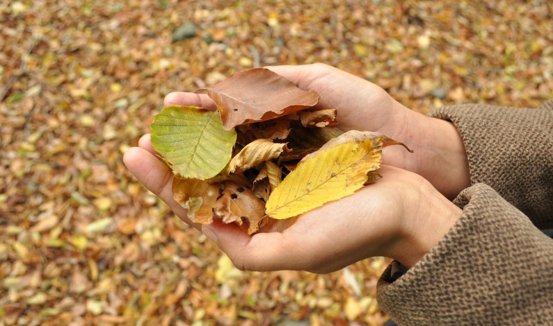 Na podzim je imunitní systém těla v největším ohrožení
