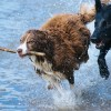Nejoblíbenější plemena psů v ČR – máte je doma také?