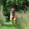 Jak funguje elektronický ohradník pro psy?