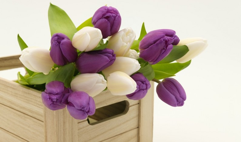 Jak potěšit kolegyni? Nechte jí doručit květinu k narozeninám až ke stolu