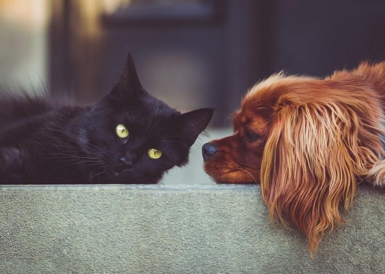 Psí chlupy – jak ovlivnit línání vašich domácích mazlíčků?