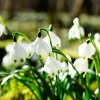 Jak připravit zahradu na příchod jara?