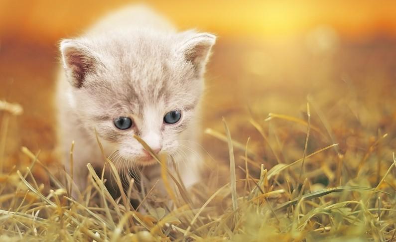 5 věcí, které je třeba zařídit, než si domů přinesete koťátko
